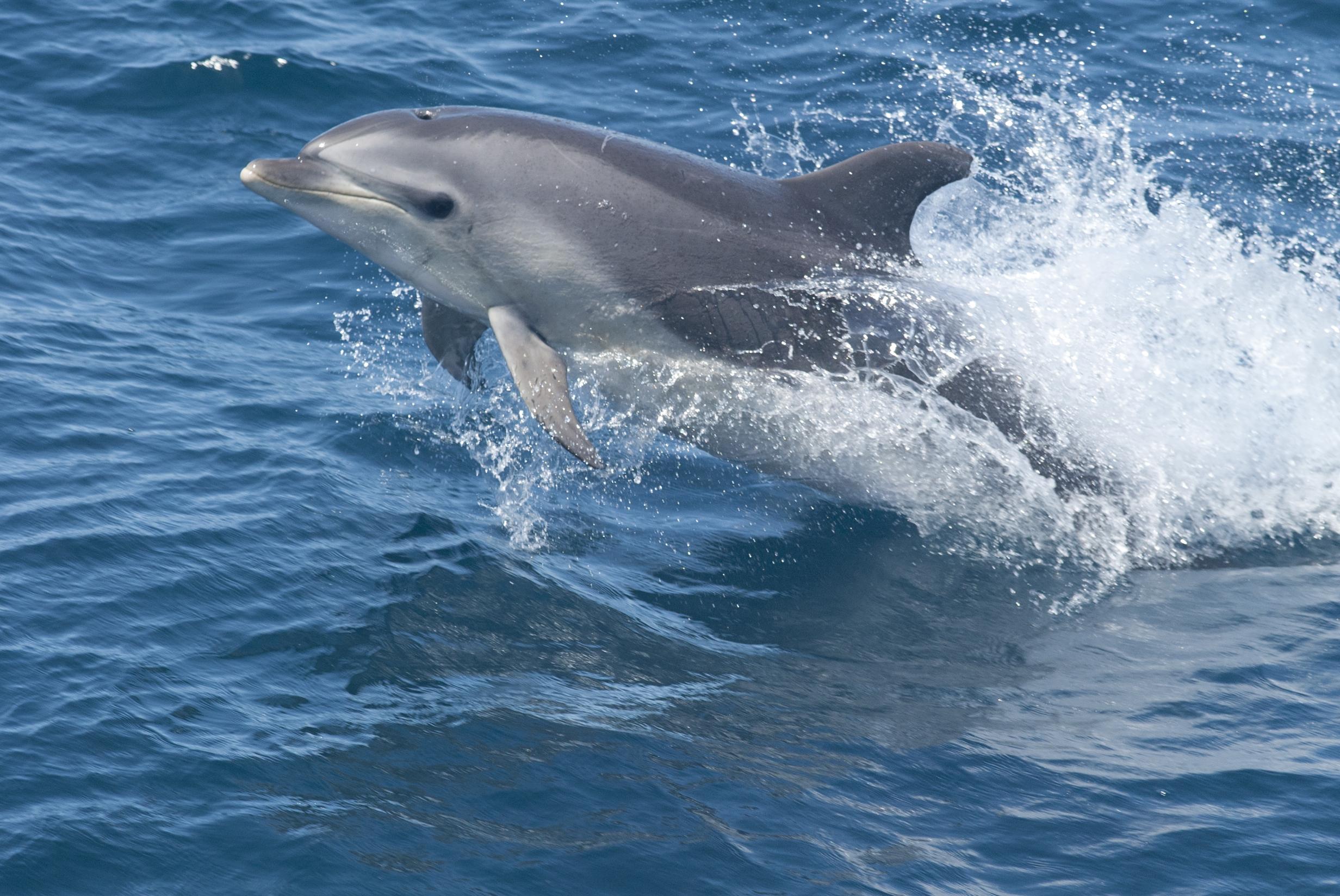 bottlenose-dolphin.jpg