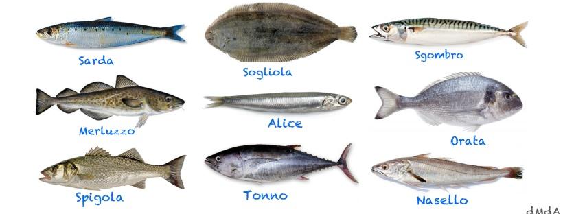 Alimentazione pesci buoni e pesci cattivi di mare d 39 amore for Pesci di fiume