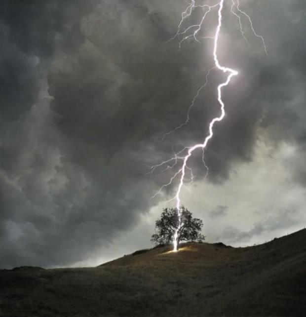 albero fulmin.jpg